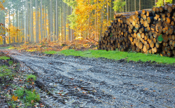 "Corporate action on deforestation could ""fall off a cliff"" next year, CDP warns"