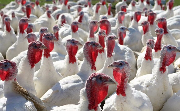 Time to give thanks for affordable and sustainable turkey