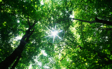 Branching out: Defra seeks input on how to boost England tree cover