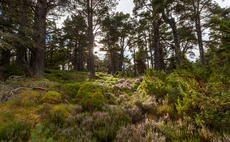 Scotland's Cairngorms pine woods, which are among the least modified woodlands in Britain | Credit: WWF